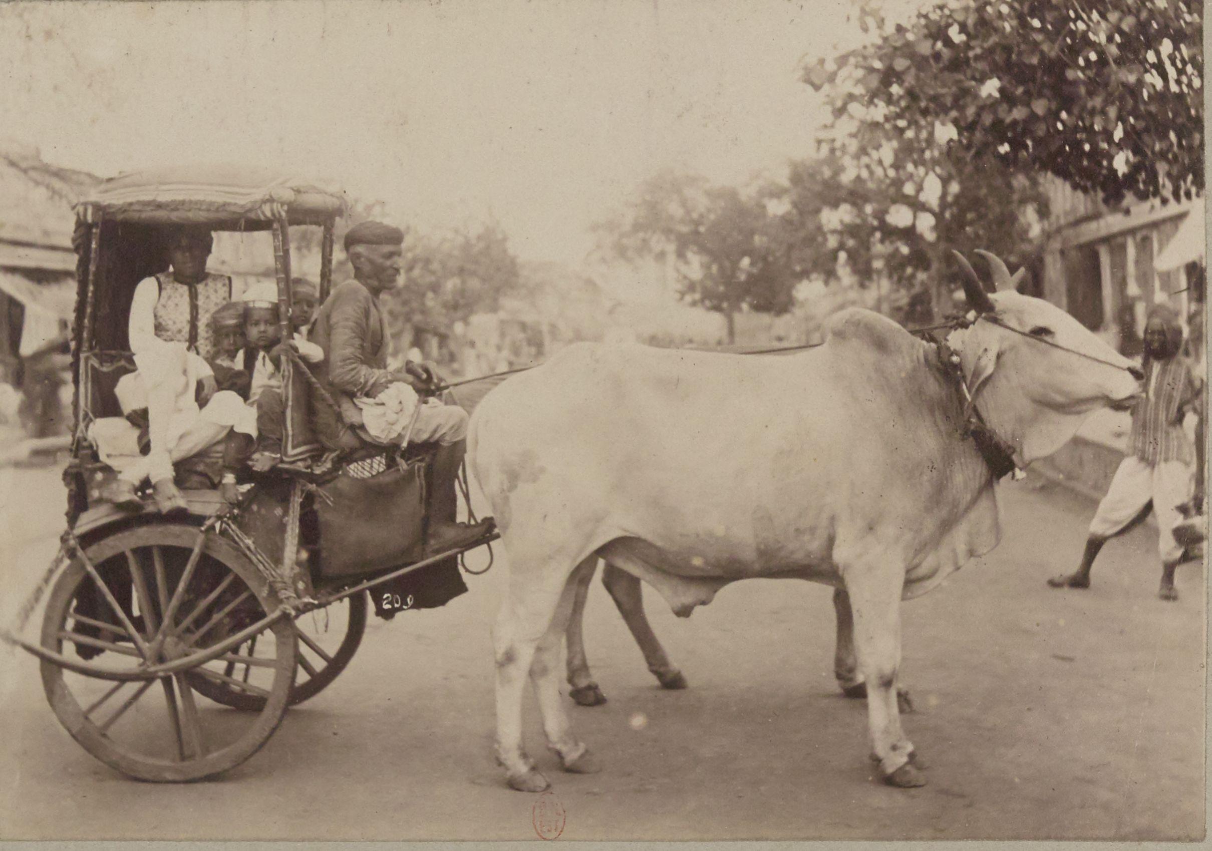 Повозка, запряженная буйволами