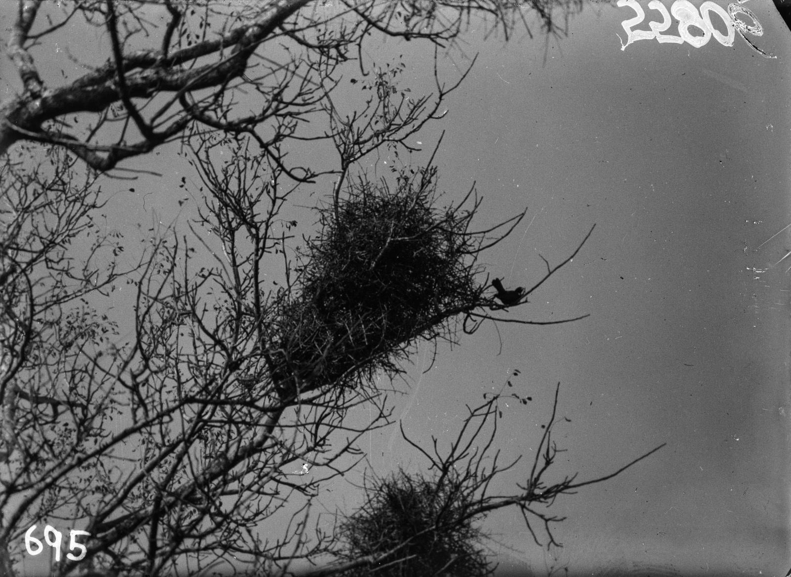 Национальный парк Крюгера. Птичье гнездо.