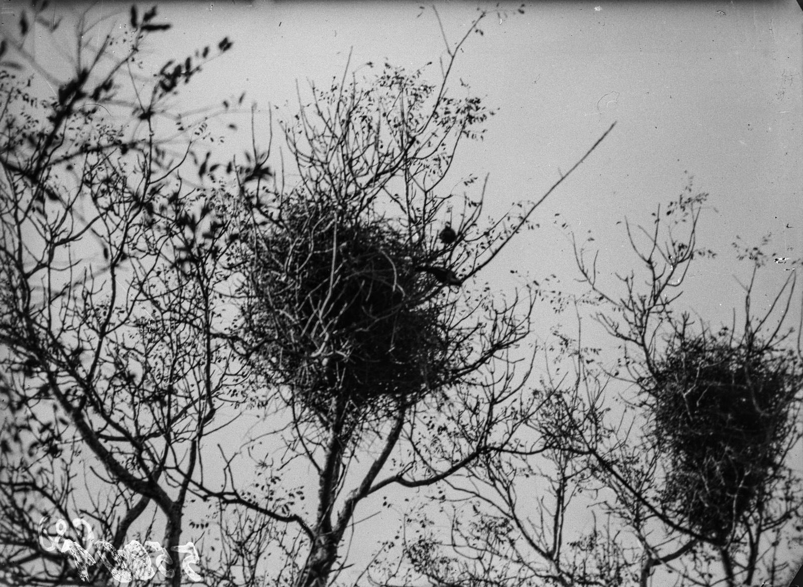 Национальный парк Крюгера. Птичье гнездо
