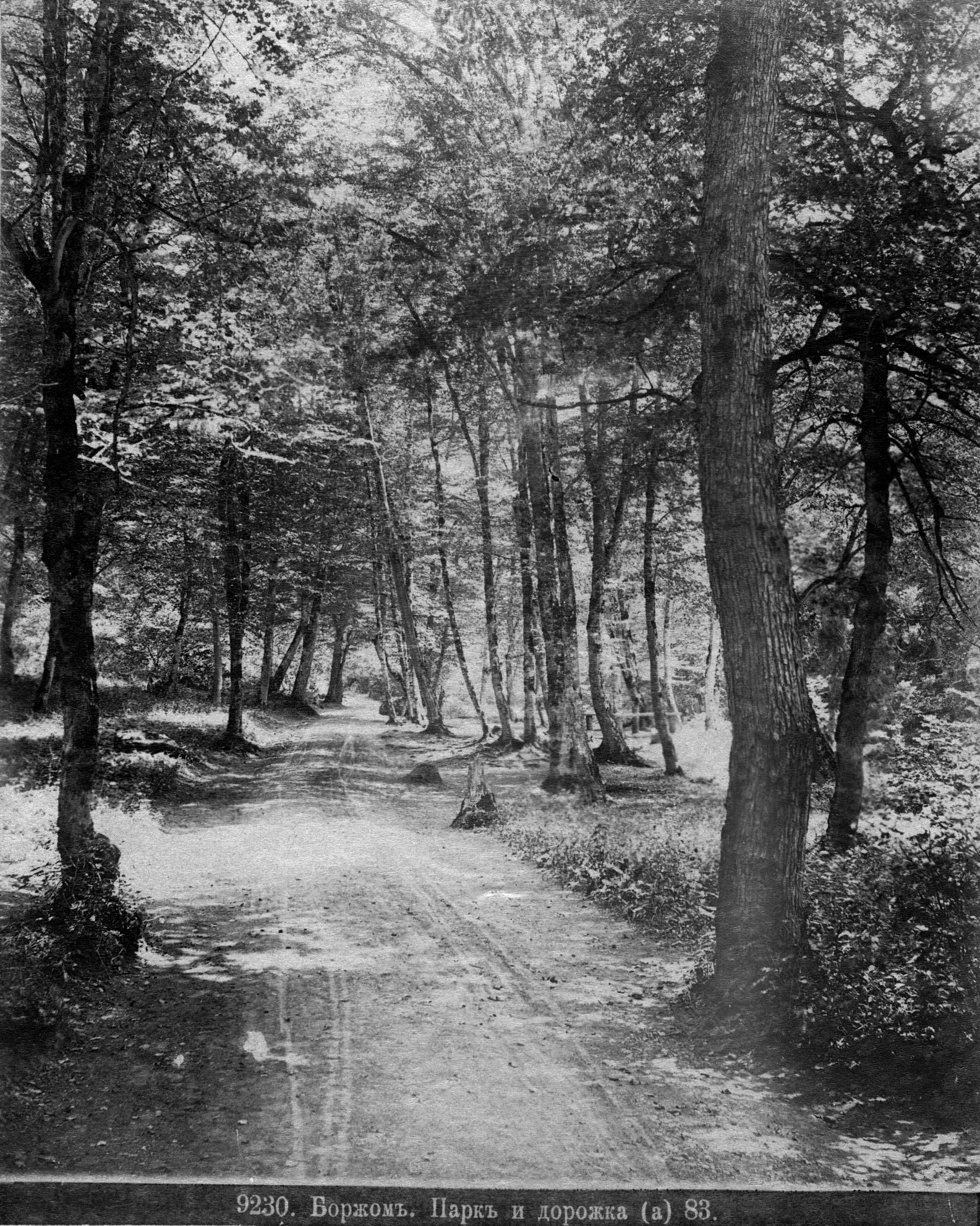 Парк и дорожка