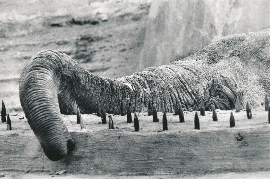 1982. Слон в московском зоопарке