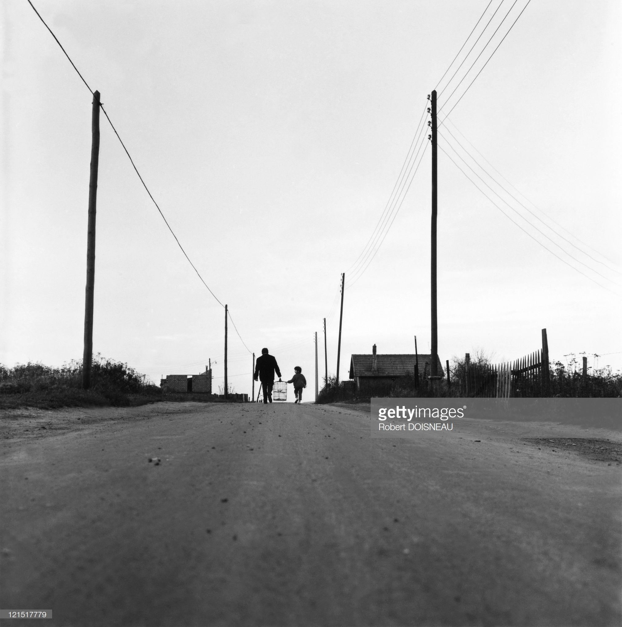 1950. Девочка и голубь