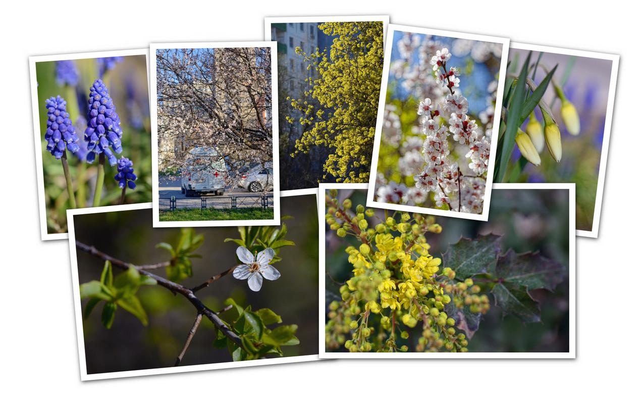 APC_Collage - 2020.04.14 20.08 - 001