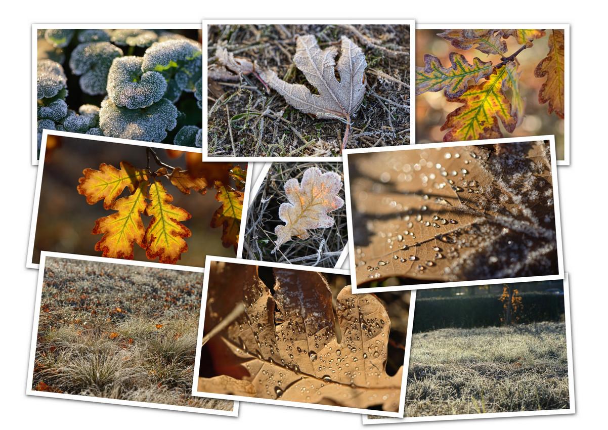 APC_Collage - 2020.11.15 19.11 - 001