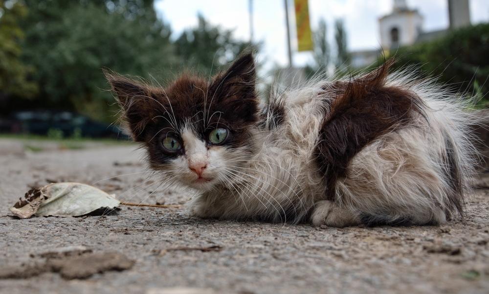 котенок с зелеными глазами...