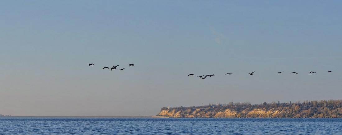 Птицы летят