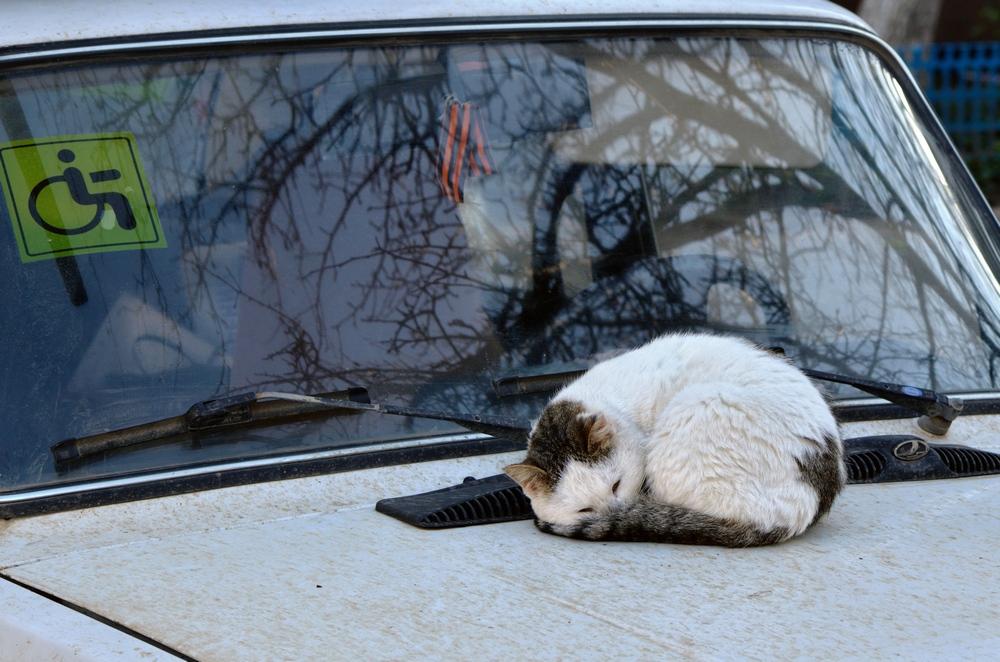 одинокий котэ на теплом капоте