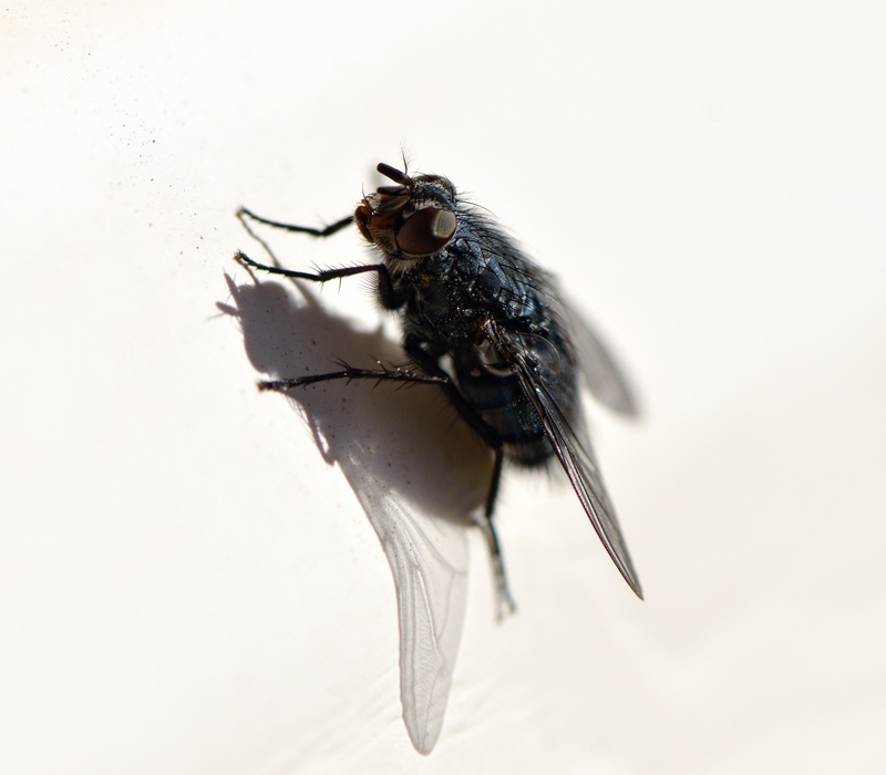 муха на стене