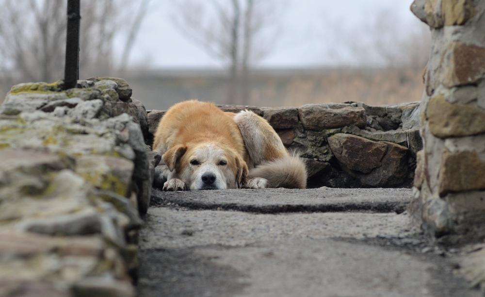 старый собак