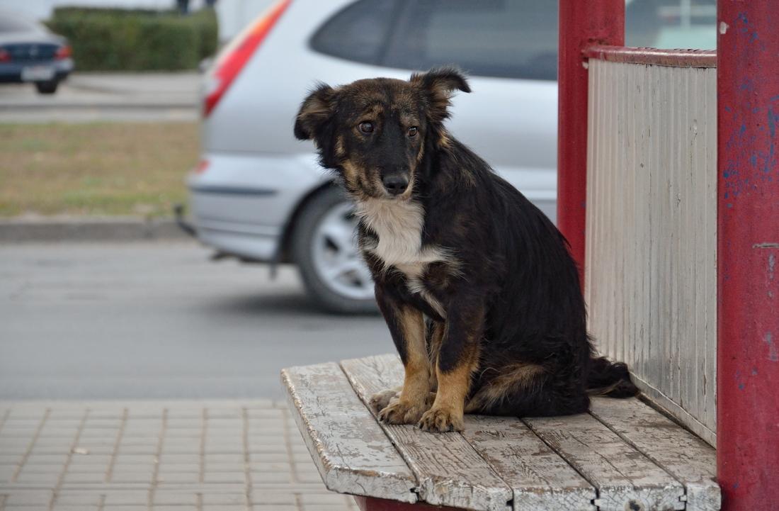 собак на остановке...