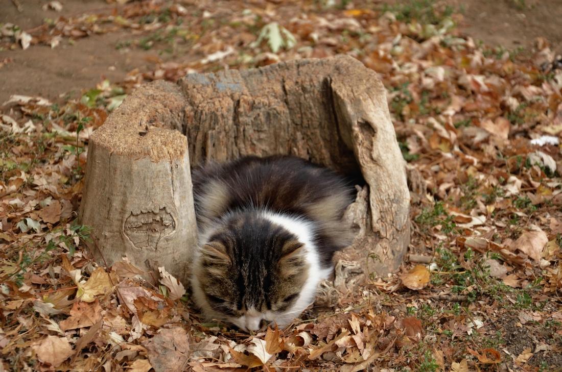 кот в пеньке