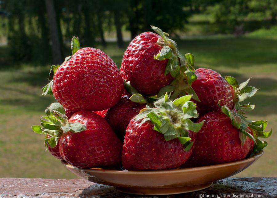 Garden_Strawberry