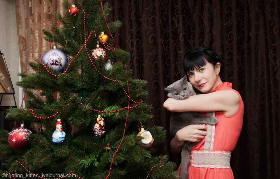 Киса и Новый год