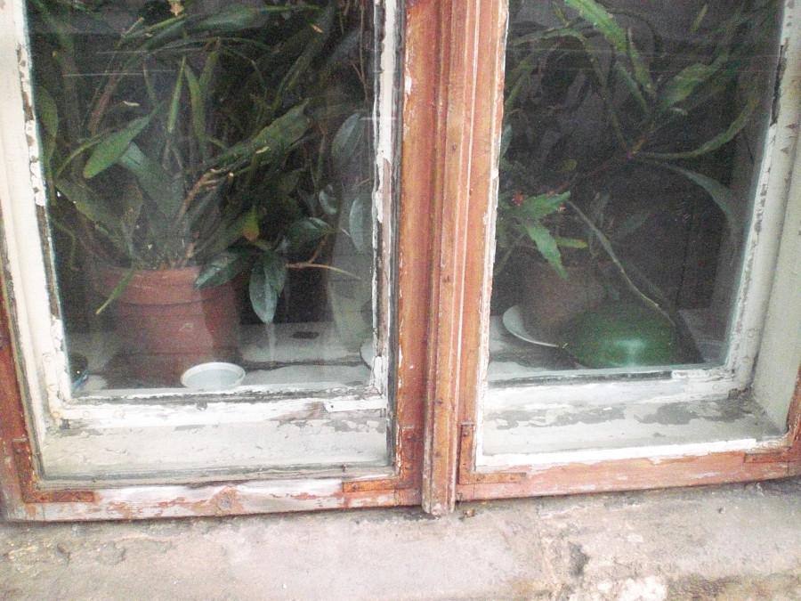 langai jasinnskio gatveje (2)_bliudelis