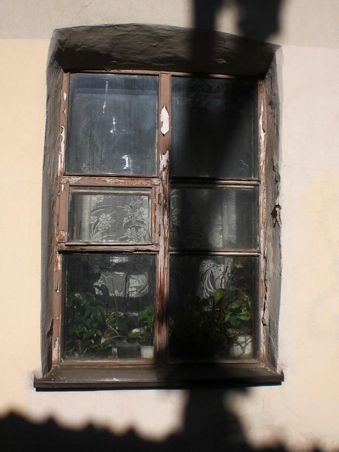 langai siltadarzio gatveje (6)_geles ir uzuolaideles