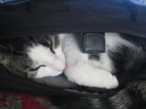 Sleeping Hannibal