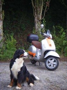 Vespa and Bernese Mountain Dog