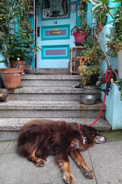 Dog, Haight-Ashbury