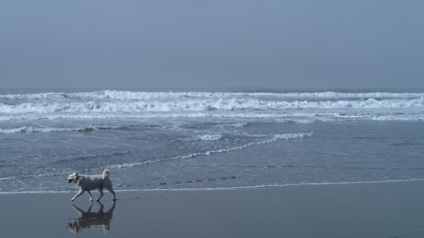 Dog, Ocean Beach