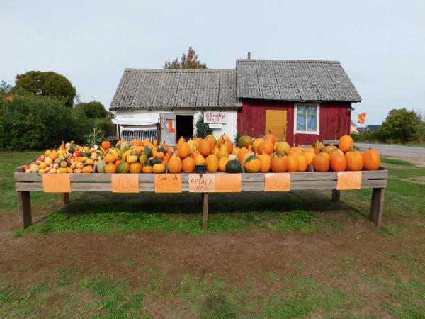 pumpkins-for-sale_44820145482_o