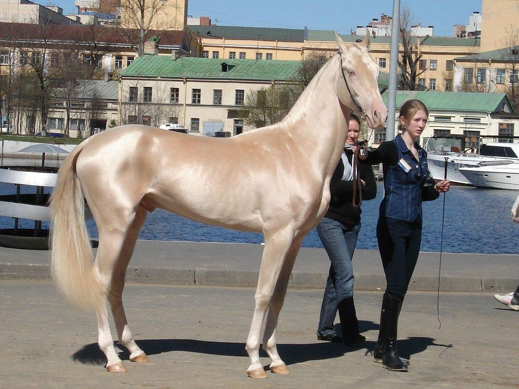 Ахалтекинская лошадь.jpg