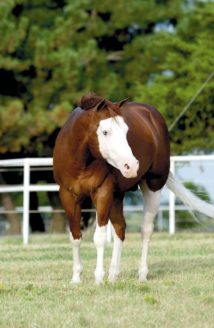 Еще одна лошадь в маске.jpg