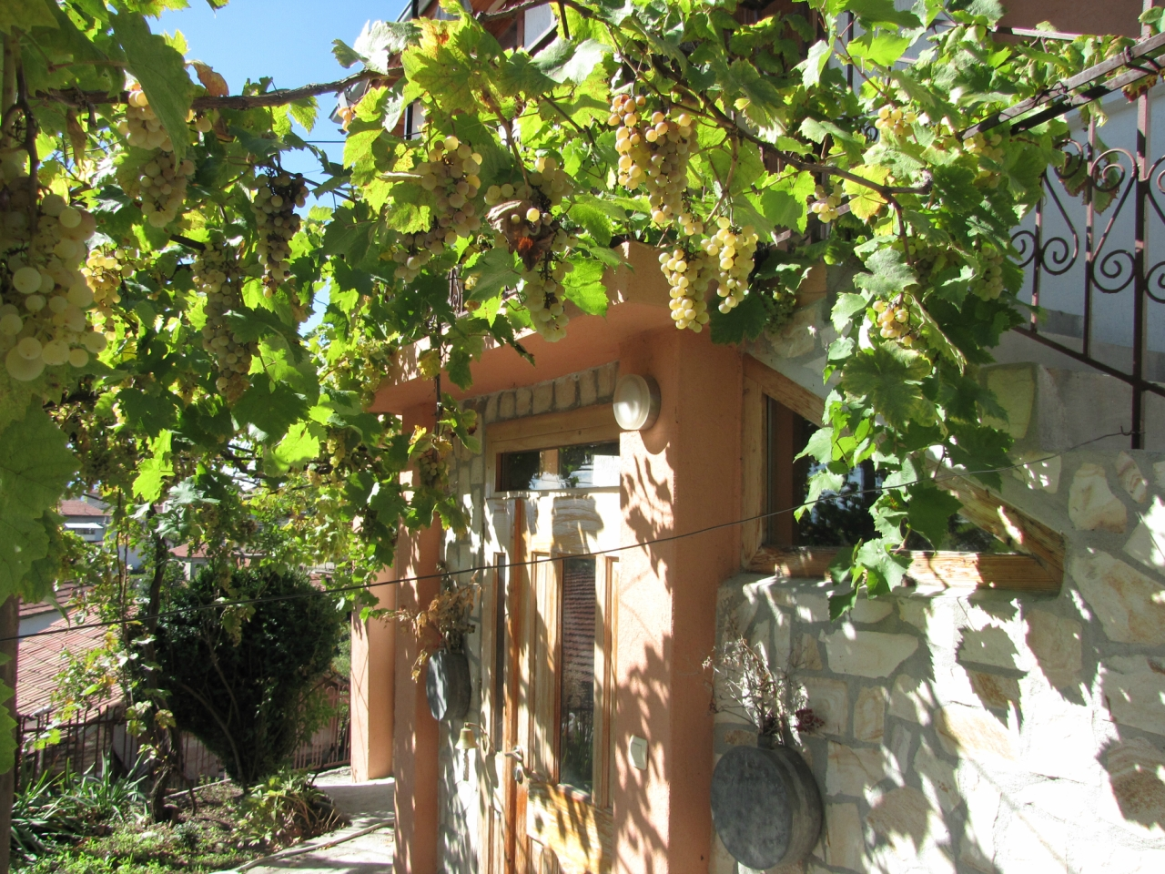 Солнечные гроздья