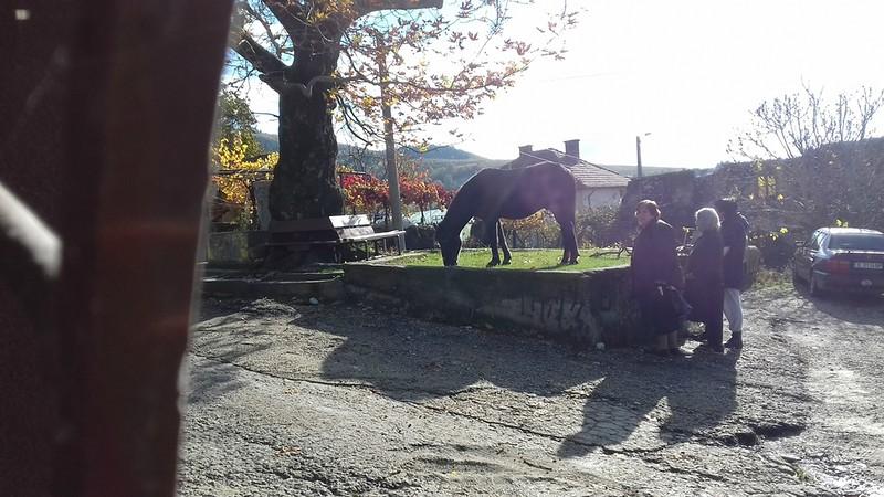 Дареному коню...