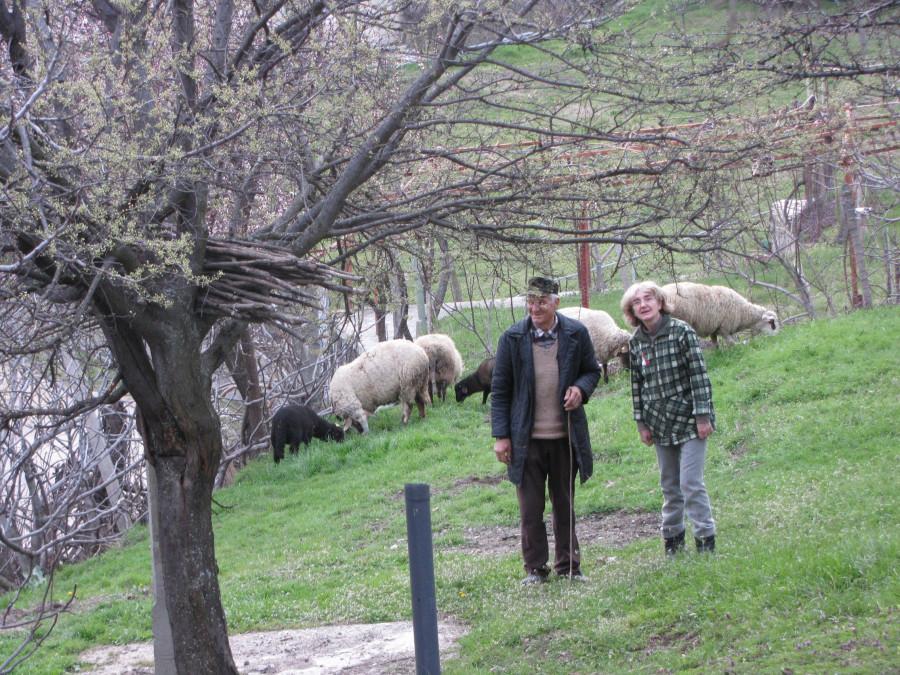 Митко и Люба с овцами на градине 002