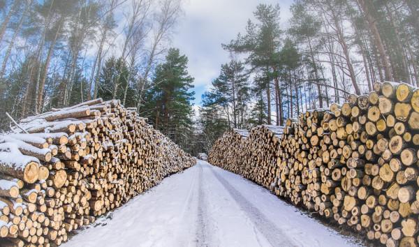 Кто «пилит» российский лес в особо охраняемой зоне Байкала?