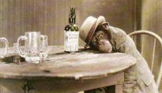 drunk_as_monkey