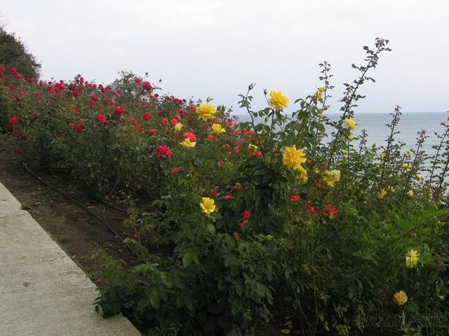 болгария-турция 378ум