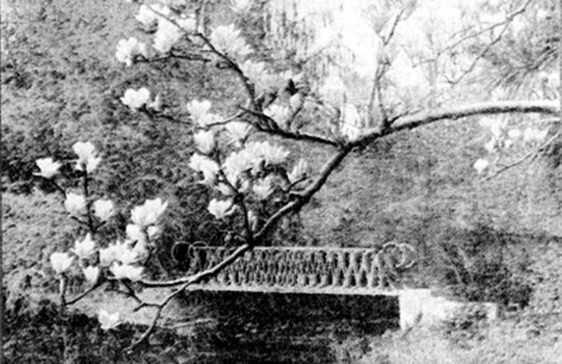 Один из красивейших мостиков парка. 1915г