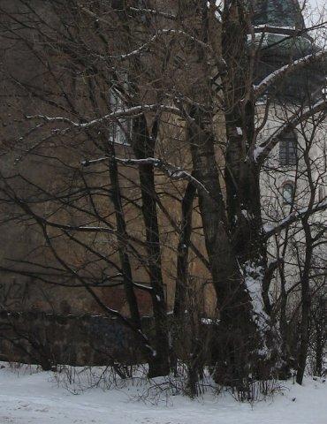 выборг.зима