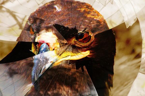 eagle 7.jpg