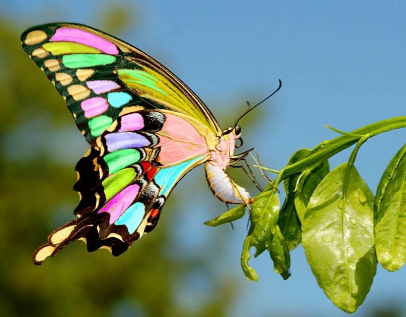 бабочки картинки очень красивые