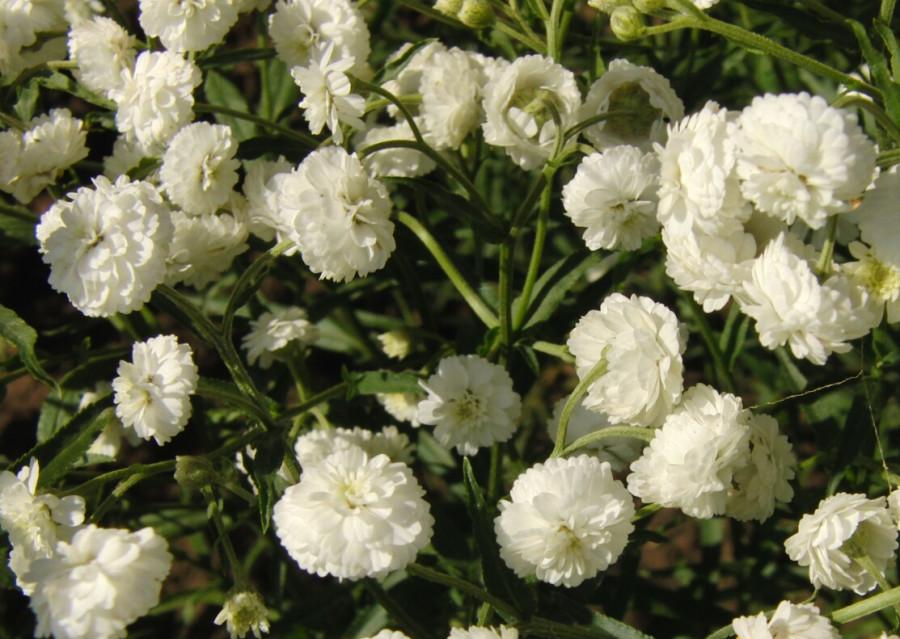 Цветы невесты