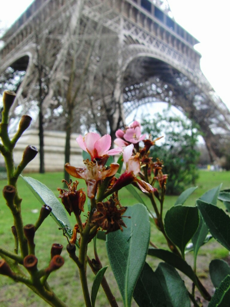 Париж зима