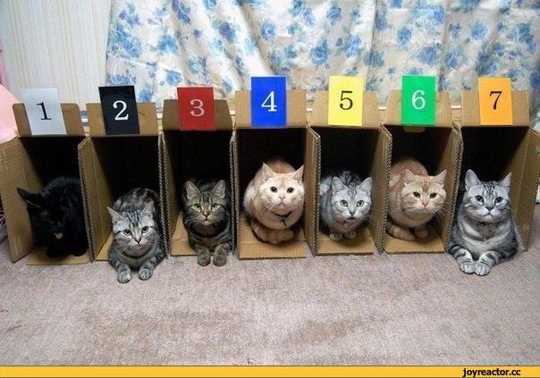 кошачьи-бега-котики-живность-коробки-969142