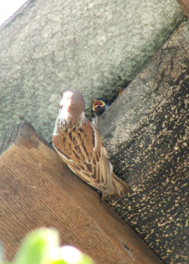 Птицо2