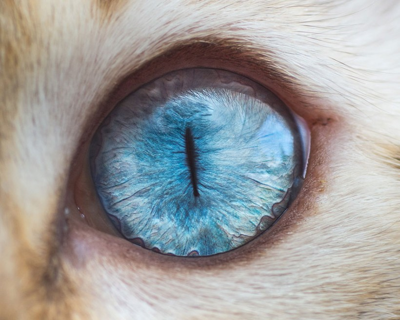 кошачий глаз (1)