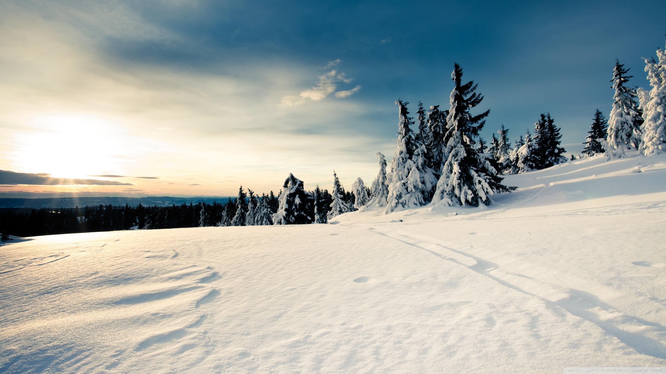 snow-sun-sunlight-winter-trees-forest-hd-2K-wallpaper