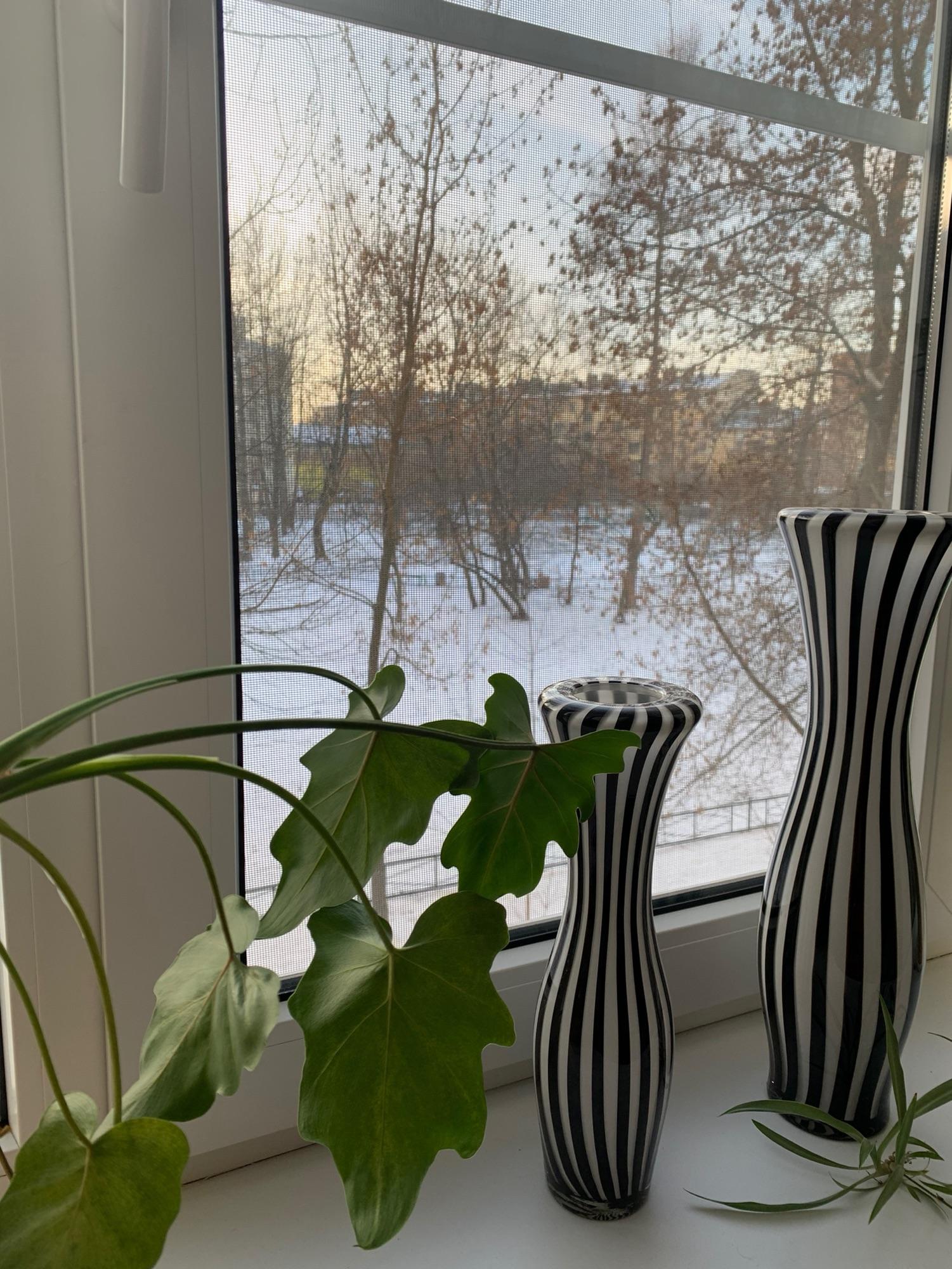 А я смотрю в окно и радуюсь жизни!