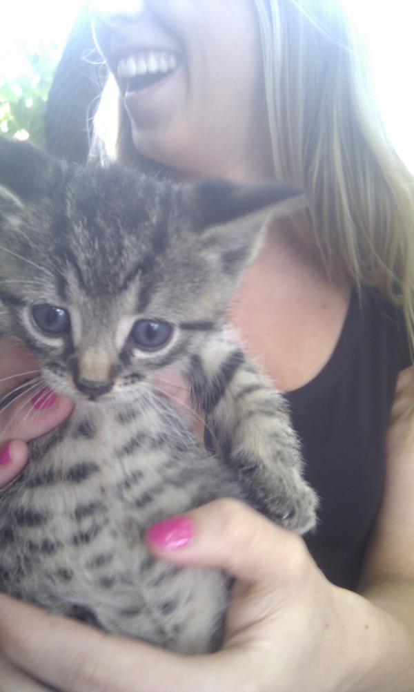 saved kitten