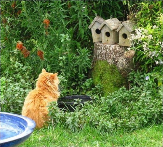 Кот и скворечники