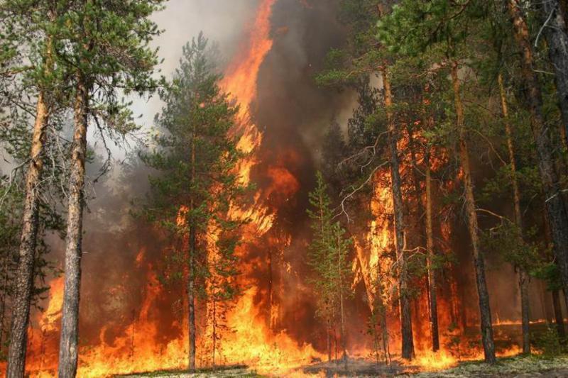 Мужики, спасайте лес от кремлевской МЧС!