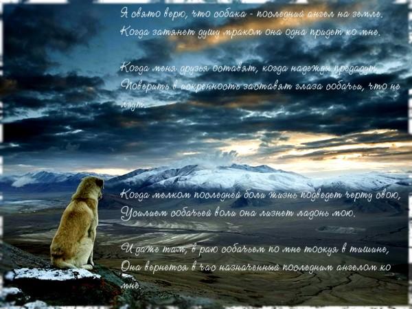 Собака_ангел