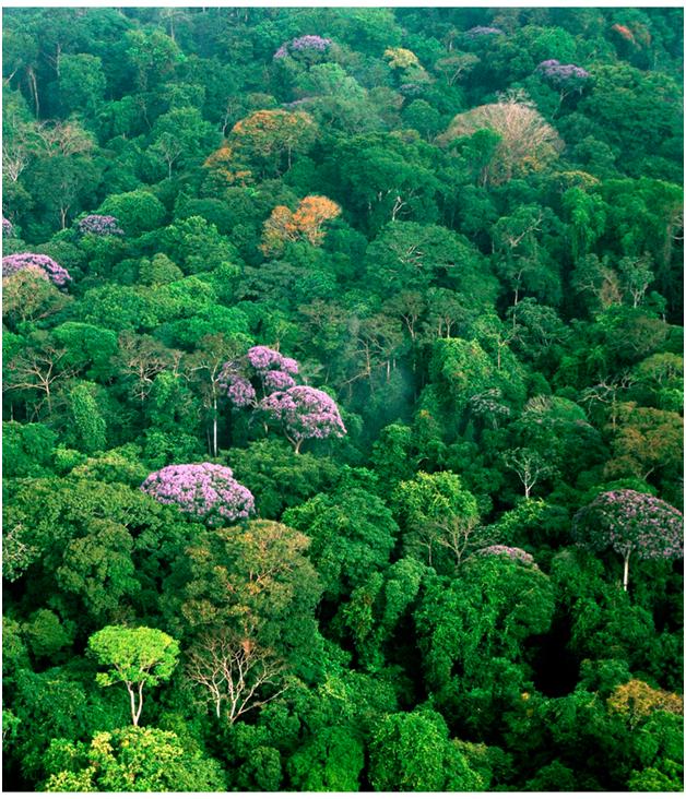 Сельва в Панаме. Вид с высоты птичьего полёта
