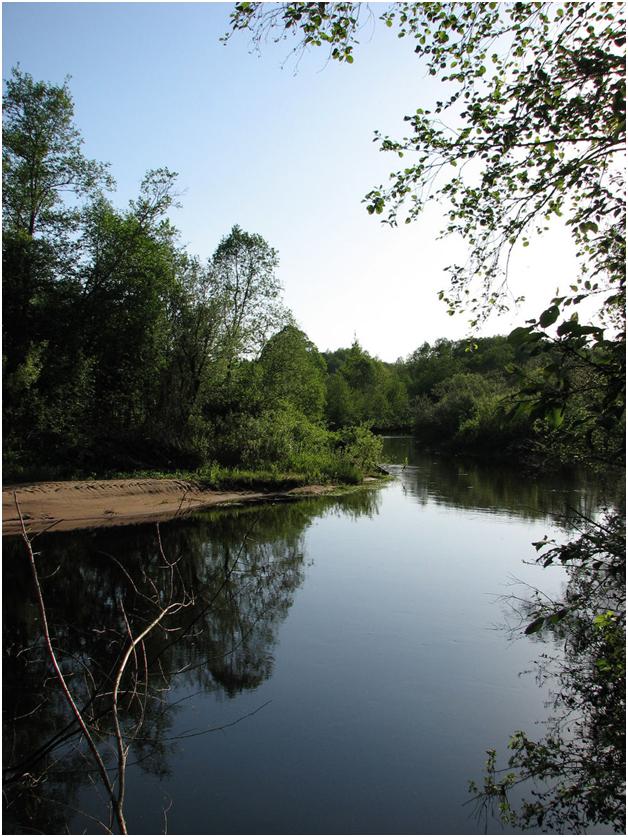 Река Руна (Новгородская область)