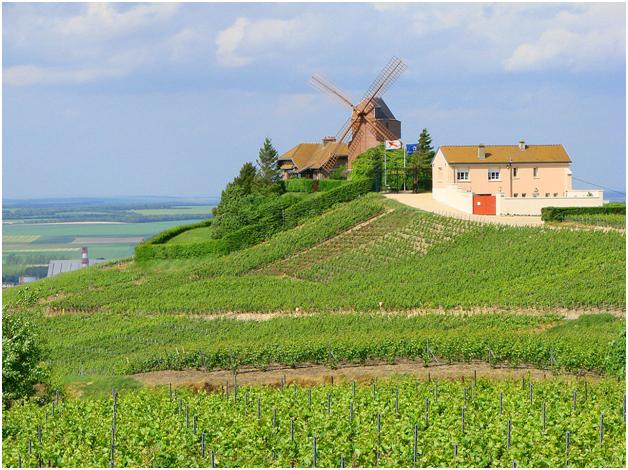Виноградники Шампани неподалёку от коммуны Верзене